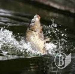 Прикордонники полюють на рибалок: за 10 рибин – 119 гривень штрафу