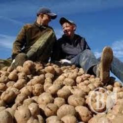 Аграрії та фермери тримаються «на плаву»