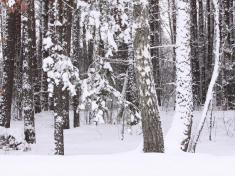 Казка зимового лісу фоторелаксація